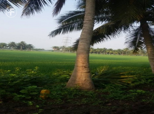 Agriculture Land for sale,buy at Sivakodu, Razole