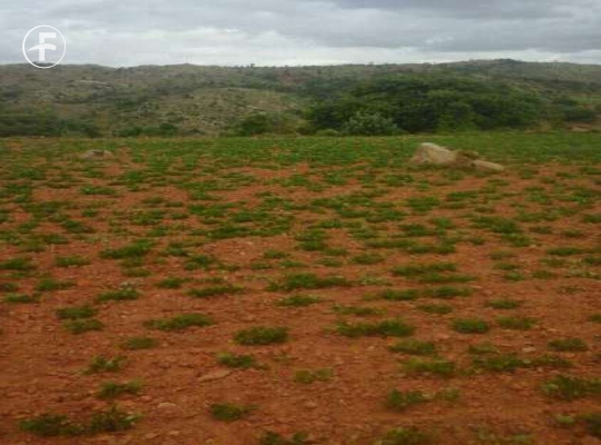 Agriculture Land for sale,buy at Madanapalle - Terrafortune com