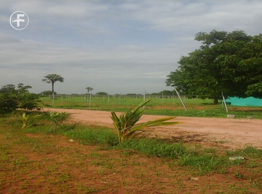 Agriculture Land at  Kattangoor