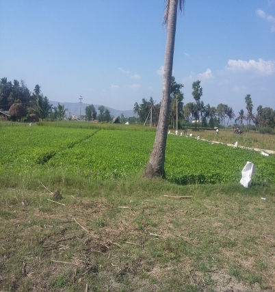 Agriculture Land at  Tiruchanoor